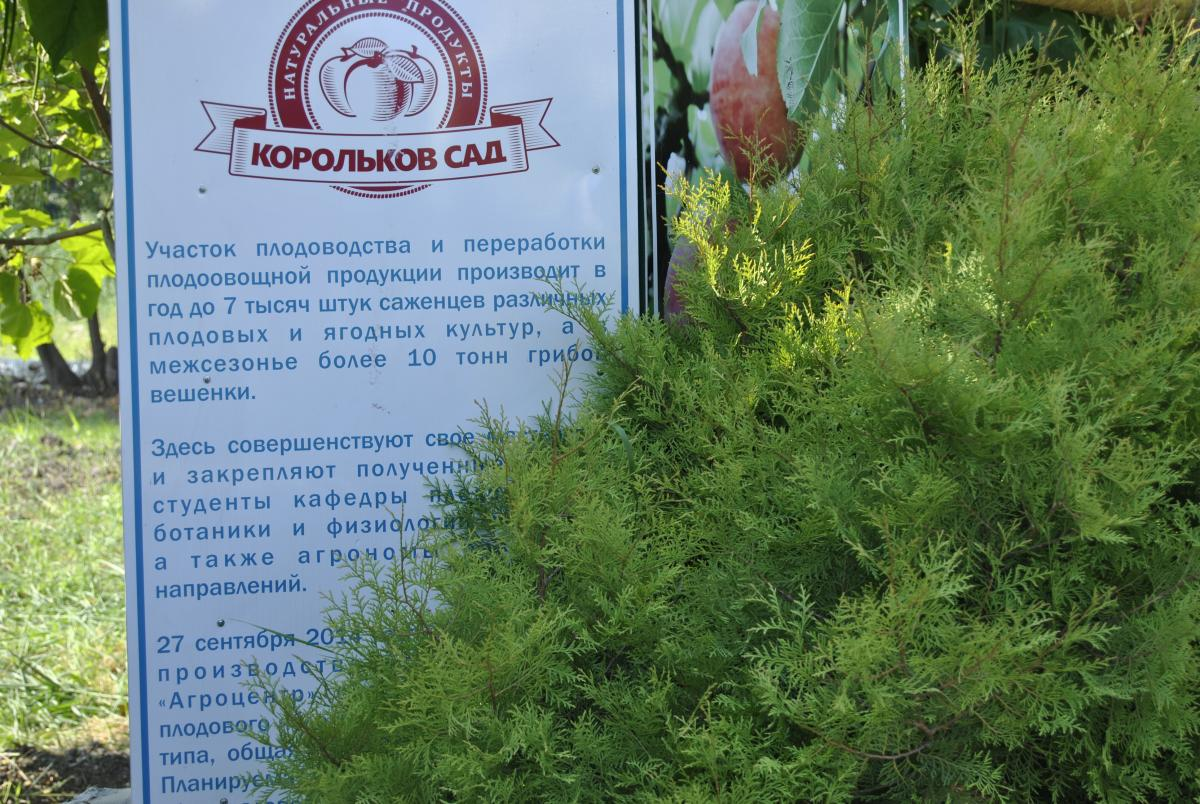 The First Weekends in Korolkov Garden