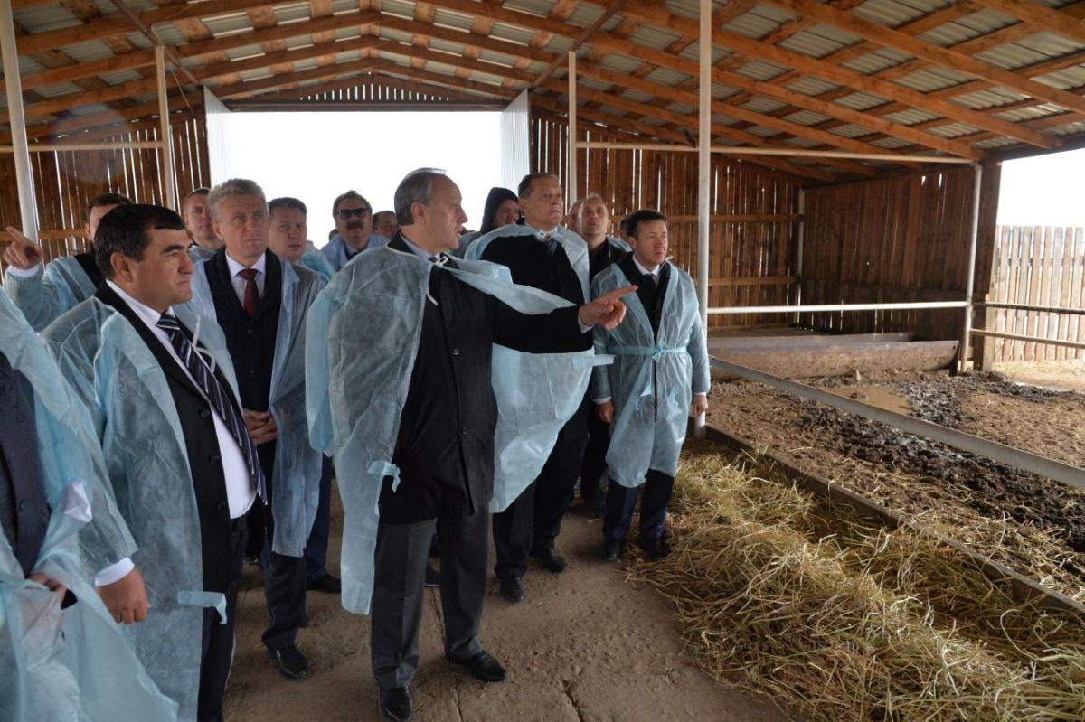 Saratov state agricultural university took part in the seminar on livestock development in Saratov region. Фото 5